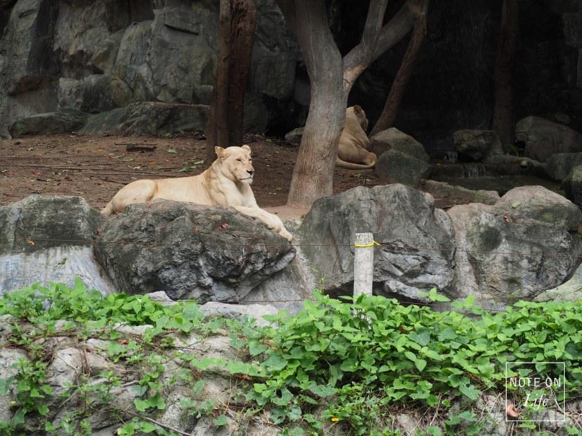 Chiangmai Zoo Chiangmai Northern Thailand