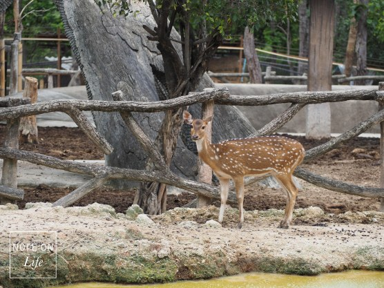 Chiangmai Zoo Attractions Northern Thailand