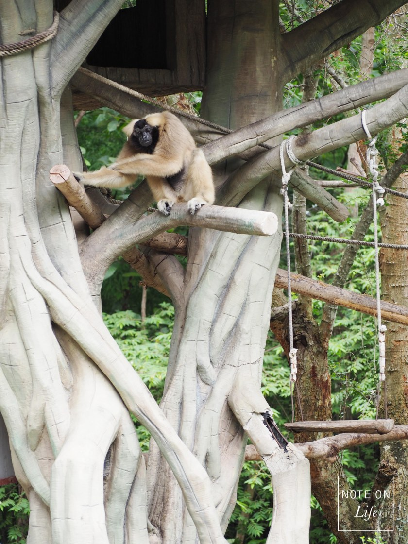 Chiangmai Zoo Northern Thailand