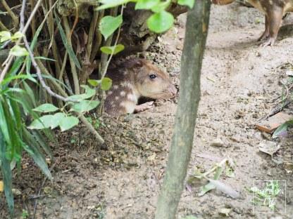Chiangmai zoo, Northern Thailand