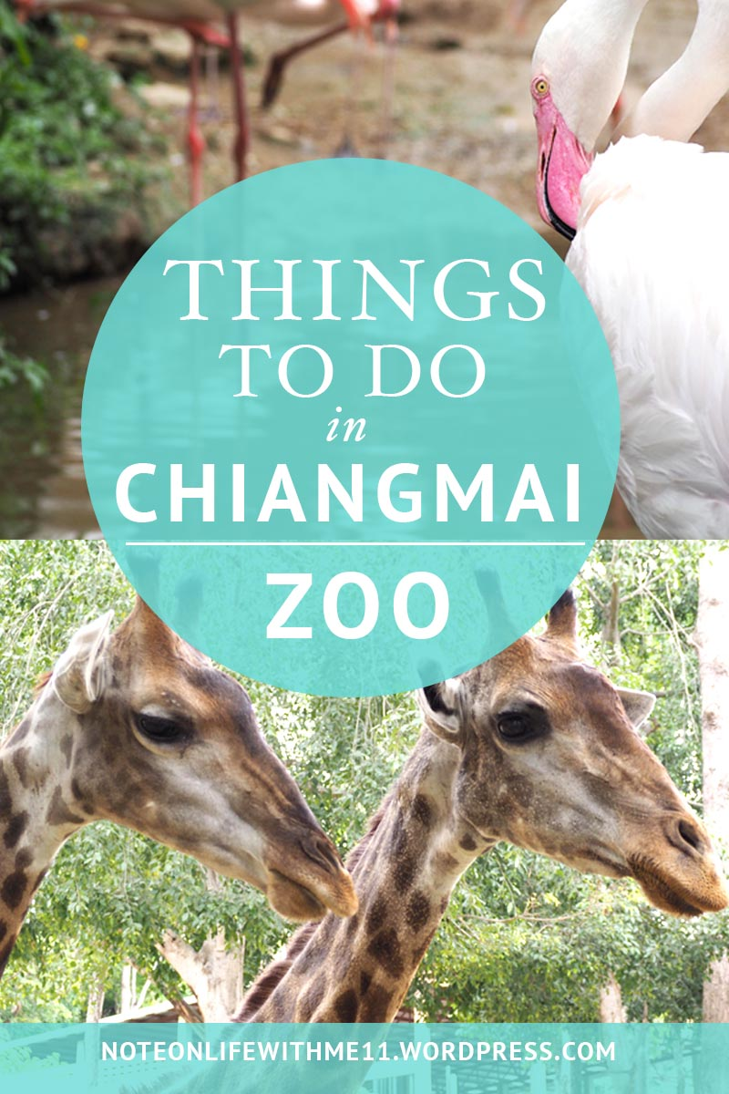 Things to Do in Chiangmai Zoo Family Activities