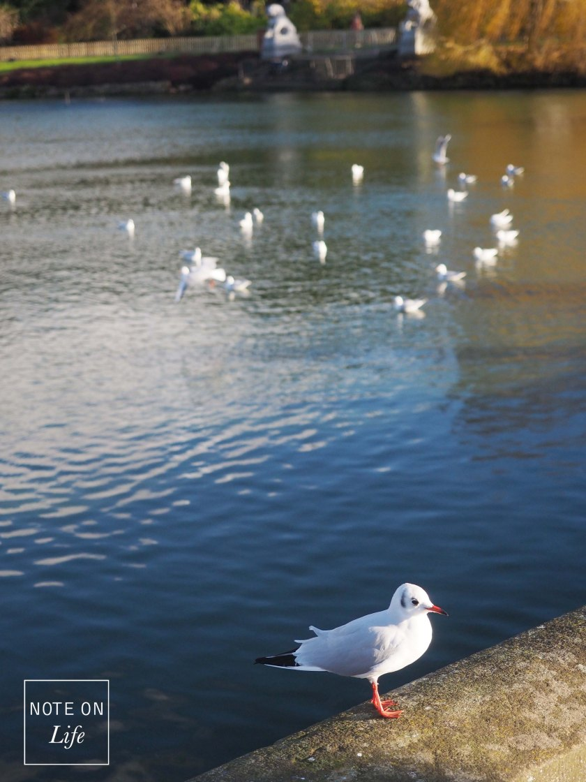 Seagull Pond Kew Garden London