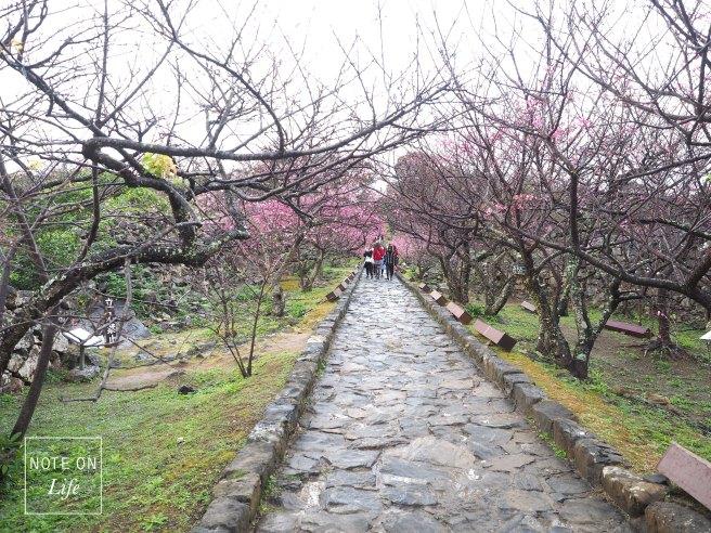 Nakijin Castle Remains Okinawa Japan Cherry Blossoms Travel 今歸仁城