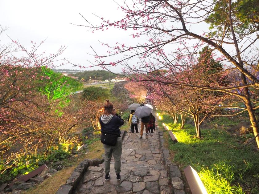 Okinawa Cherry Blossom Travel Sakura