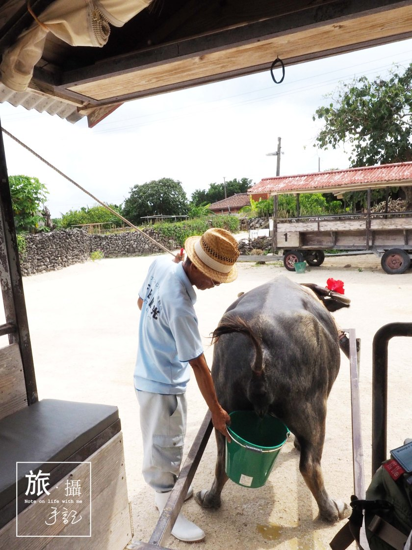 Okinawa Ishigaki Island Travel 沖繩 水牛車 Buffalo cart