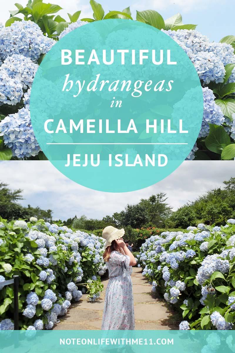 Cameilla Hill Jeju Island 濟州 Korea